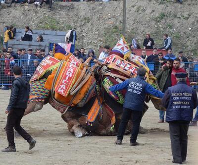 Kuyucak'ta bir asırlık deve güreşlerine yoğun ilgi