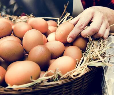 Ekim ayında üretilen yumurta adedi belli oldu