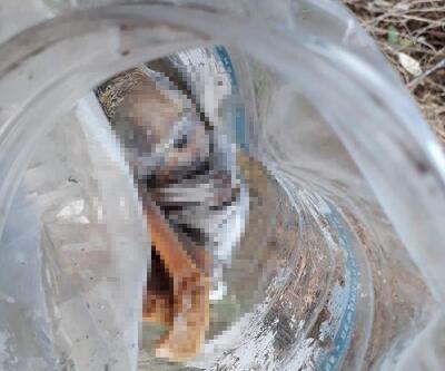 Plastik bidon içinde bebek cesedi bulundu