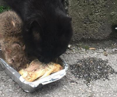 Kedi ve fare aynı kaptan yemek yedi