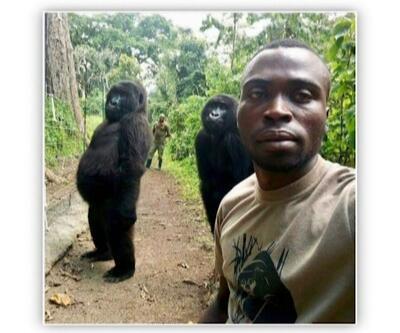 Gorillerin selfiesi sosyal medyanın dilinde