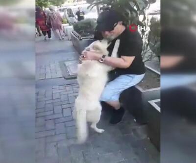 Kayıp köpek sahibini karşısında görünce bakın ne yaptı