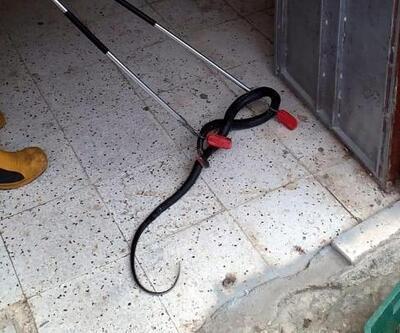 Apartman girişindeki yılanı, itfaiyeciler yakaladı