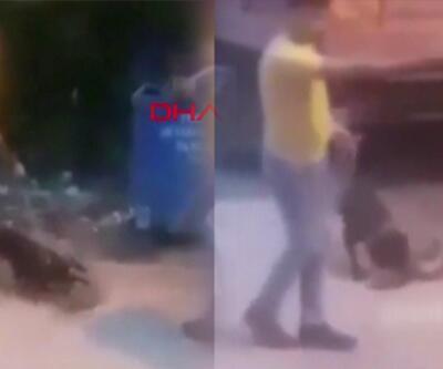 Tepki çeken görüntü! Köpeğine, sokak kedisini parçalattı