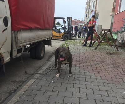 Çalınan pitbull cinsi köpek polis tarafından bulundu