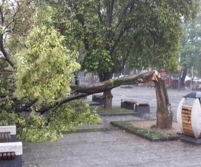 Gölcük'te şiddetli yağışta ağaç devrildi