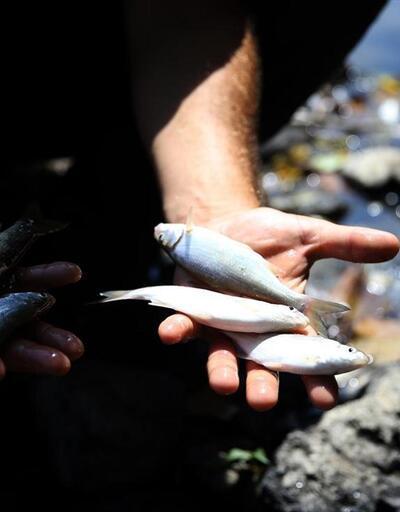 Melen Çayı'nda balık ölümleri
