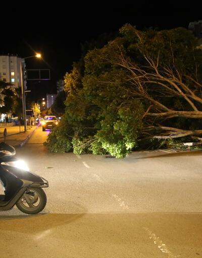 Antalya'da fırtına ağaçları köklerinden söktü