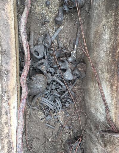 Traktör ve mazgalla gizlemişler... 1700 yıllık lahiti satmak isterken yakalandılar