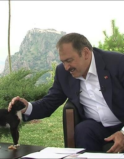 Bakan Eroğlu'ndan hayvanseverlere yavru kedi çağrısı