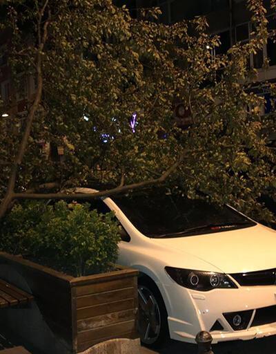 İstanbul'da rüzgar ağaçları devirdi
