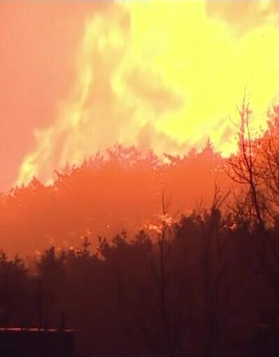 Güney Kore orman yangını ile boğuşuyor
