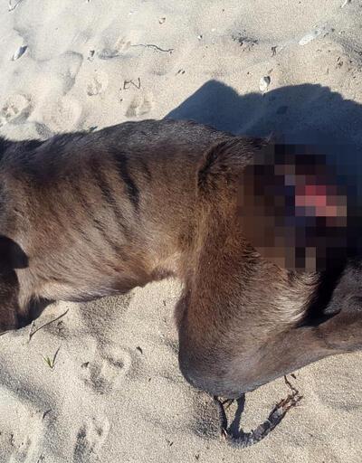 Sokak köpeğine tüfekli saldırı