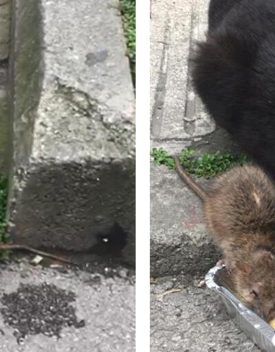 Kedi ve farenin dostluğu görenleri hayrete düşürdü