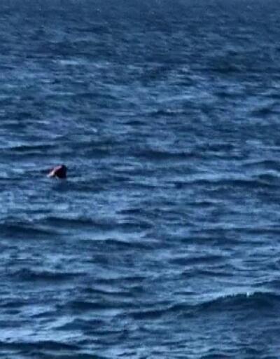 Yüzerek Yunanistan'a geçmeye çalışan kişiyi, Sahil Güvenlik kurtardı