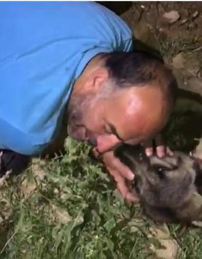 Araç çarpan köpeğinin başında gözyaşı döktü