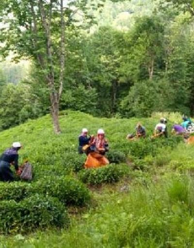 'Çaya Geliyoruz' projesi ile şehit annesinin çay hasadını yaptılar