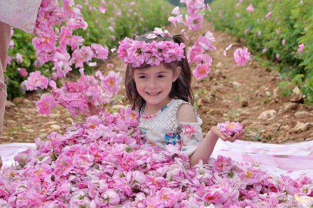 Isparta'da güller açtı