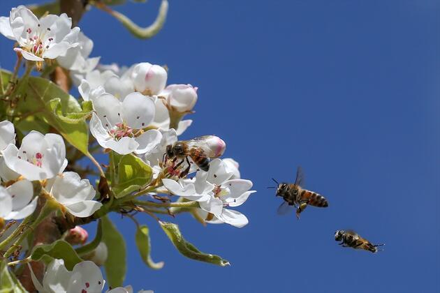 Doğa ilkbaharla canlandı