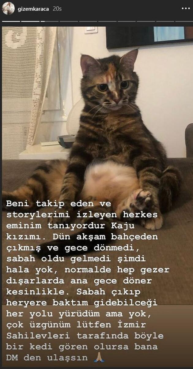 Gizem Karaca kedisini kaybetti