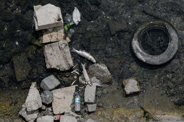İstanbul'da tedirgin eden balık ölümleri