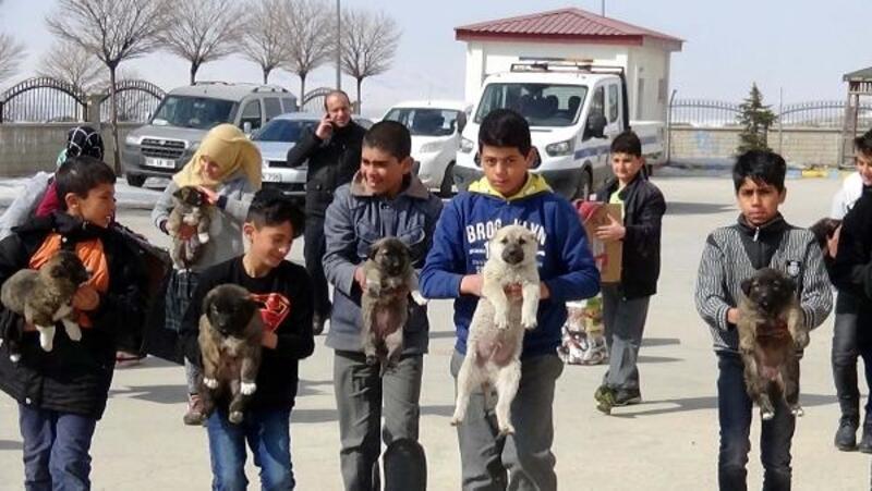 Erciş'te işkence edilen köpeklere öğretmen ve öğrenciler sahip çıktı