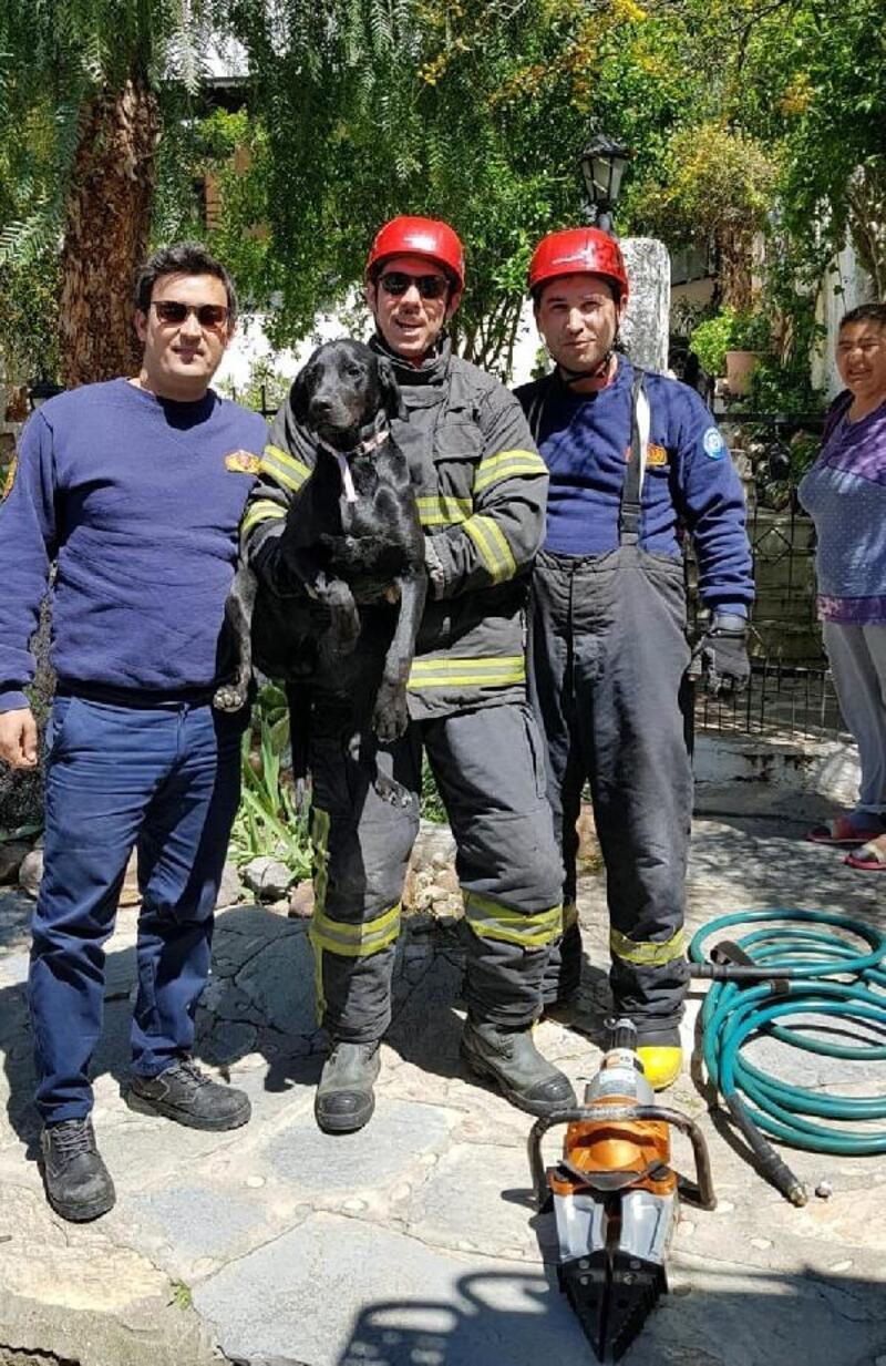 Bahçe kapısına sıkışan köpek kurtarıldı
