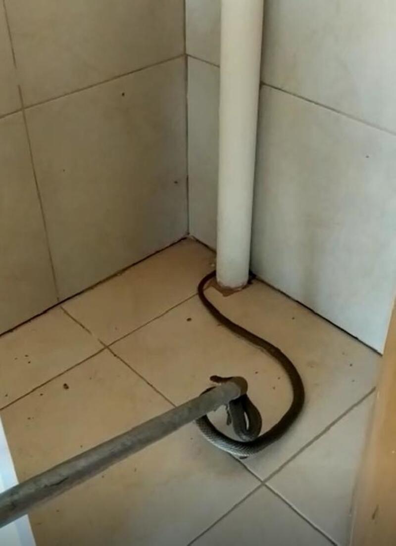 Balkona gelen yılan korkuttu