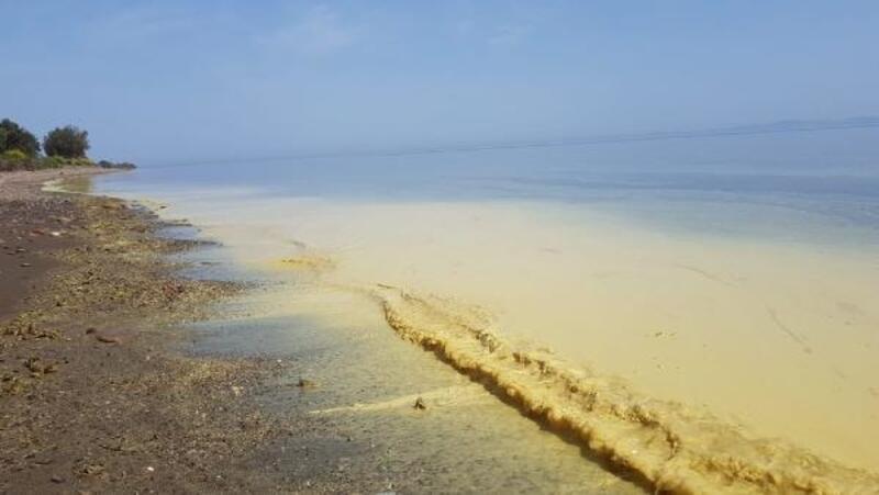 Assos sahilindeki ürküten görüntü için analiz sonuçları bekleniyor