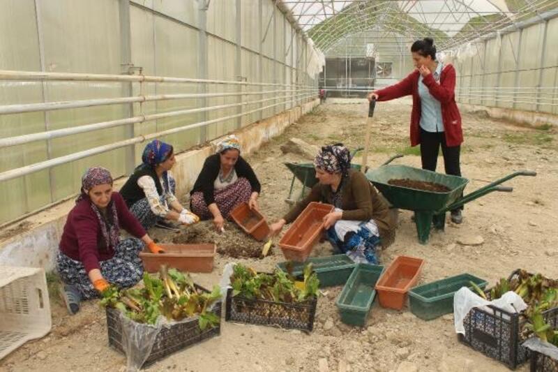 Hakkarili kadınlar organik tarım evi açtı