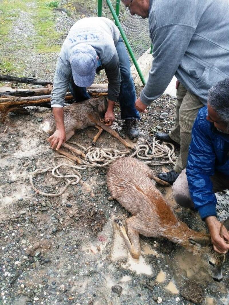 HES kanalına düşen 2 karacayı köylüler kurtardı