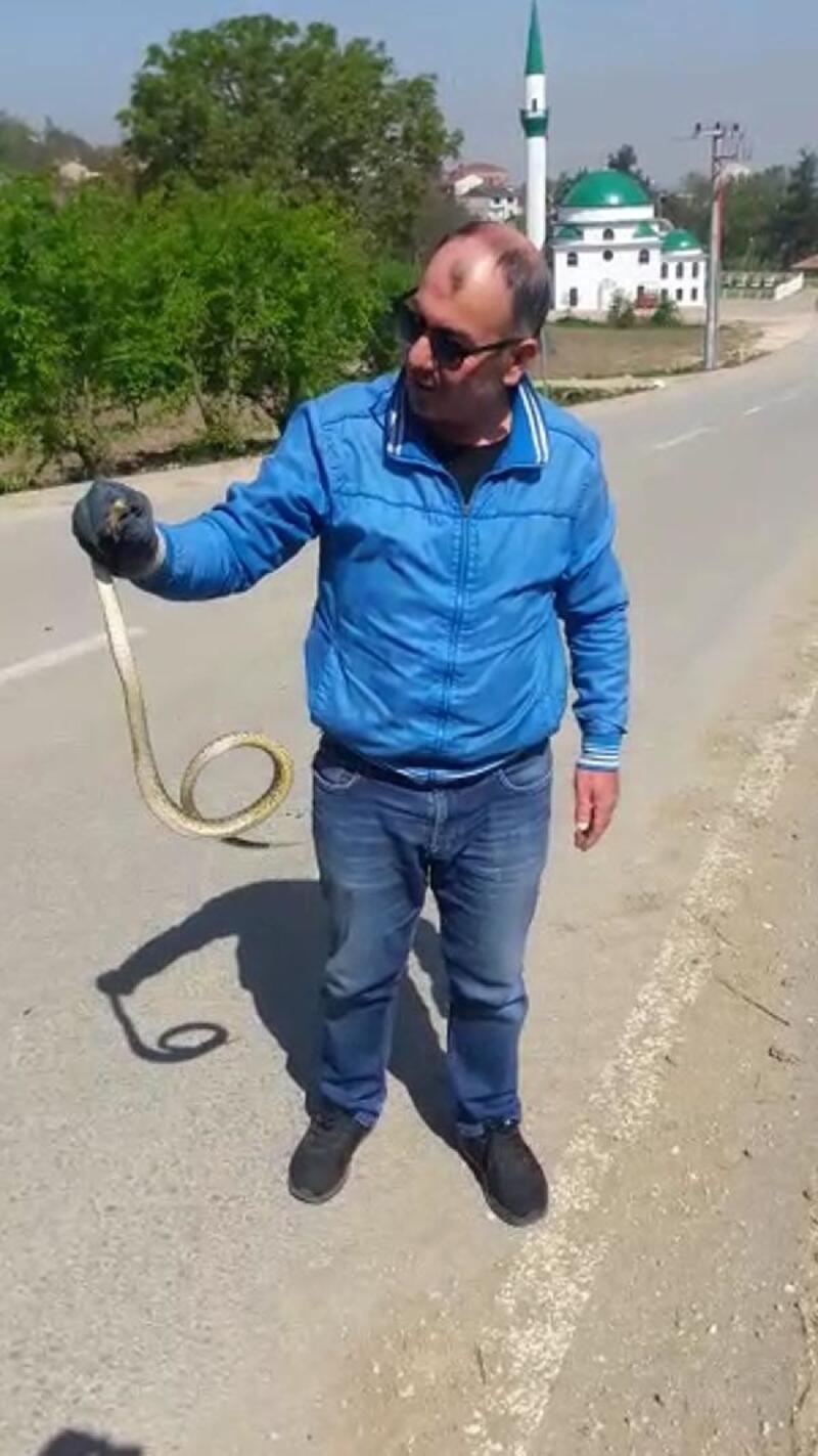 Yolda gördüğü yılanı, doğaya saldı