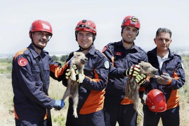 Çukura düşen yavru domuzlar kurtarıldı