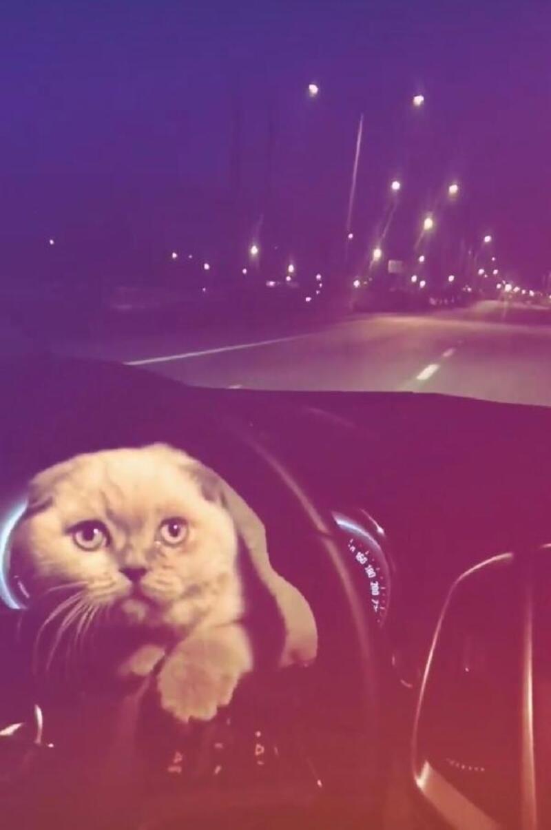 Kedisini otomobilin direksiyonuna koyarak yolculuk yaptı