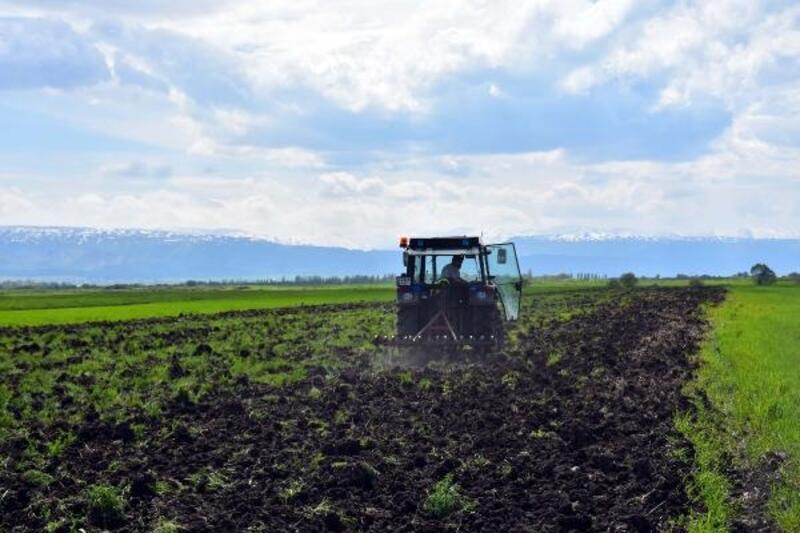Muşlu çiftçiler, şeker pancarı ekimi için tarlada