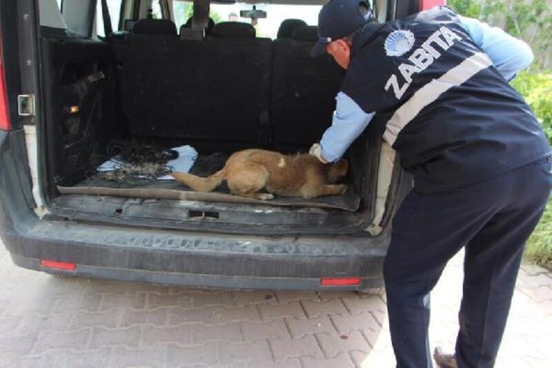 Ayağı kırılan köpek, belediye ekiplerince tedaviye alındı