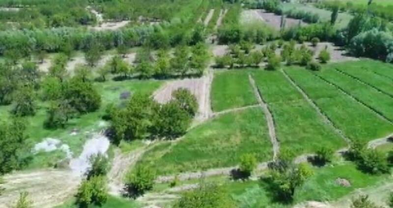 Malatya'da 3 bin 565 kök kenevir ele geçirildi