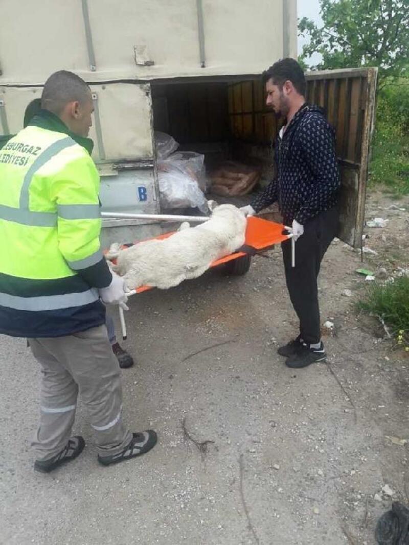 Lüleburgaz'da aç kalan anne ve yavru köpek kurtarıldı