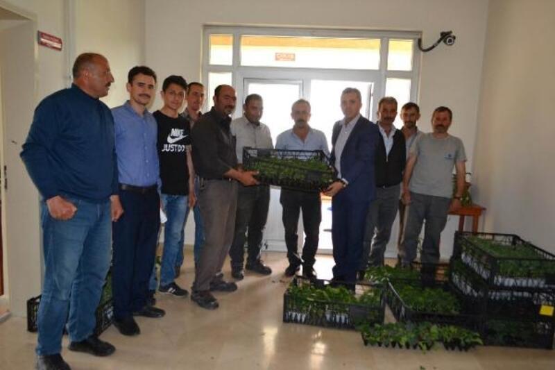 Doğanşar'da çiftçilere sebze fidesi dağıtıldı