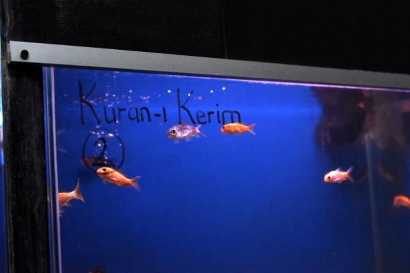 Kur'an-ı Kerim ve Tasavvuf Musikisi dinletilen balıklar daha çabuk büyüdü