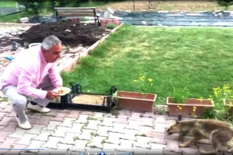 Bahçesine gelen tilkiyi eliyle besledi