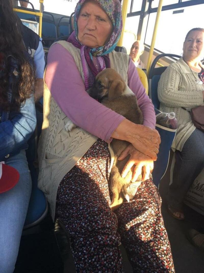 Yavru köpekle otobüse bindi, sosyal medyada konu oldu