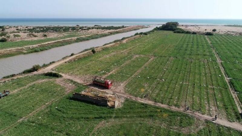 Adana'nın turfanda karpuzu, Türkiye'ye dağıtılıyor