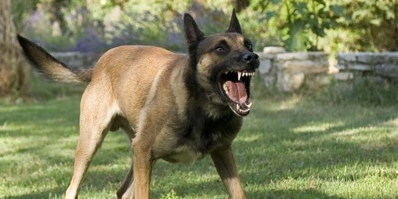 Polis köpeğinin saldırdığı kadına devletten 25 bin Euro tazminat